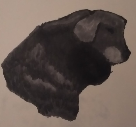 Basha, my family's dog
